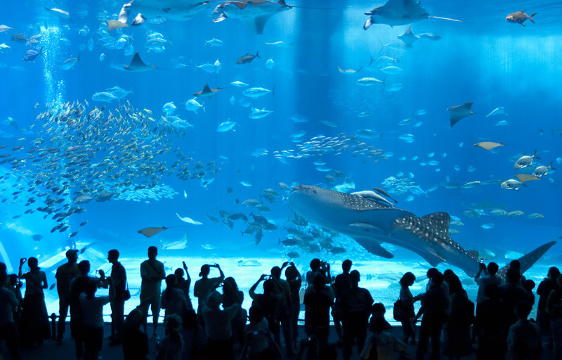 аквариум в стамбуле